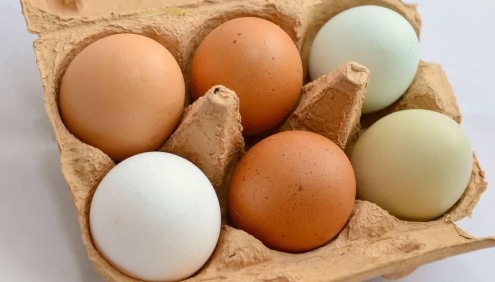 卵や野菜,果物の長期保存を可能にするバイオフィルムを開発