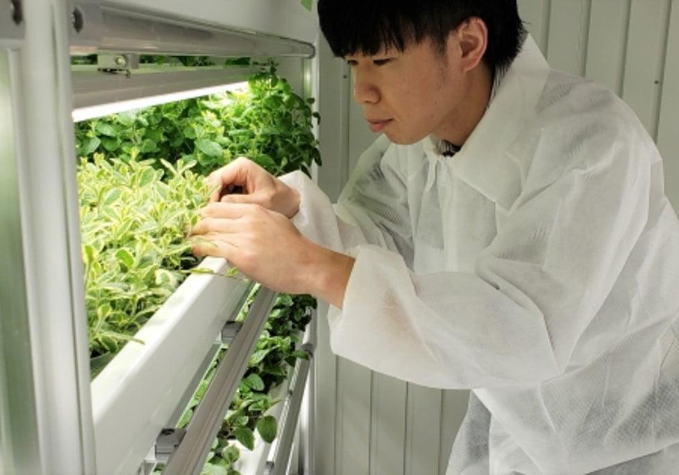 屋内農園型障がい者雇用支援サービス 「IBUKI」が考える、「すべての人が働きやすい社会」とは