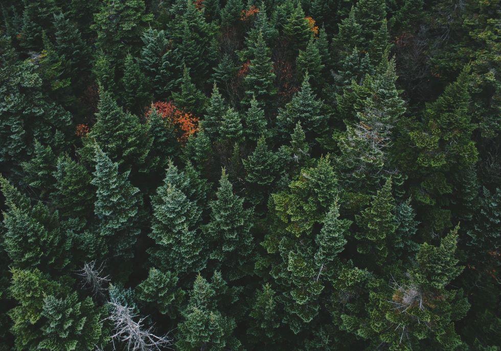 """木を切ることも森林保全に!?""""未来杜市""""岡山県真庭市の森林資源を生かしたまちづくりとは"""