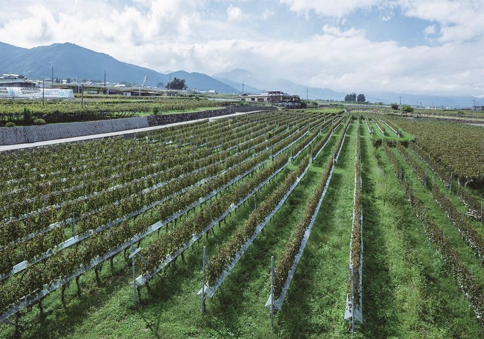 """ワインの""""絞りかす""""がシャンプーに?日本ワイン発祥の地「ワイン県やまなし」の廃棄物削減への取り組みとは"""